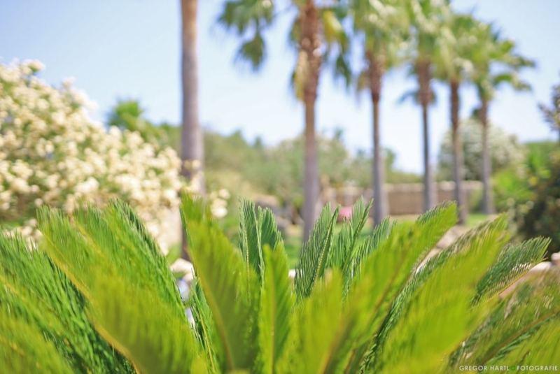 Sattets Grün auf Mallorca