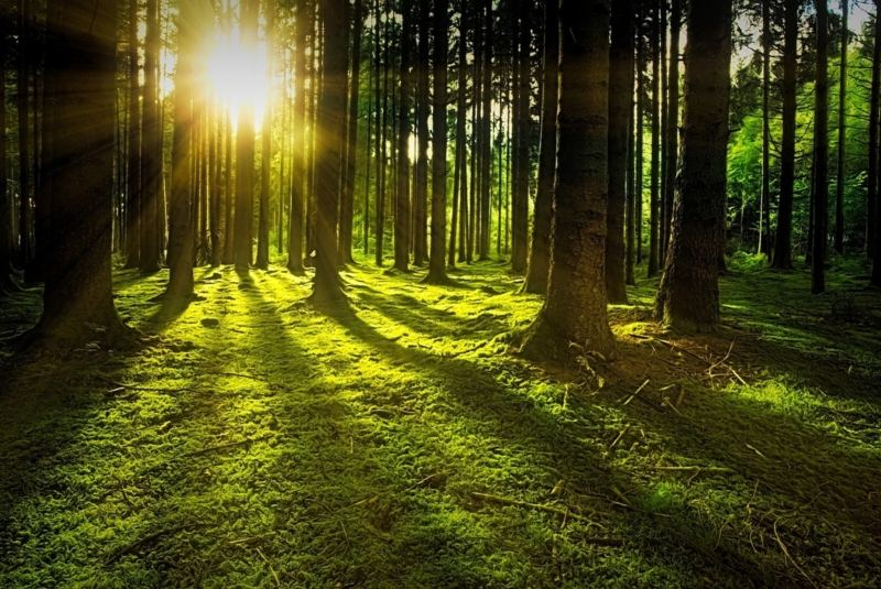 Mit Waldbaden Kraft aus der Natur schöpfen