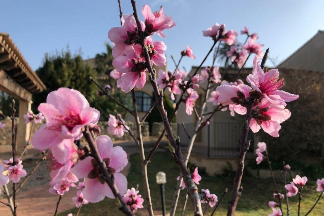 Yin Yang Yoga & Thai Massage zur Mandelblüte