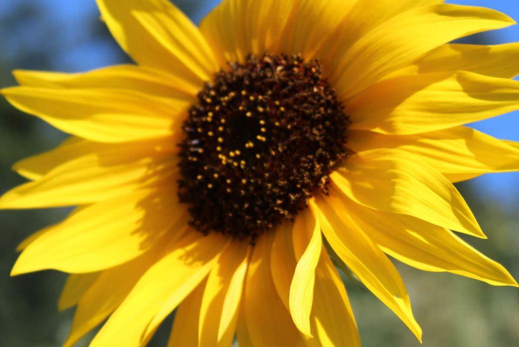 Feldenkrais: Entspannte und freie Kiefergelenke
