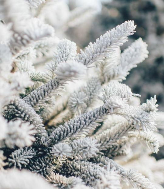 Yoga & Winter-Schneeschuhwandern