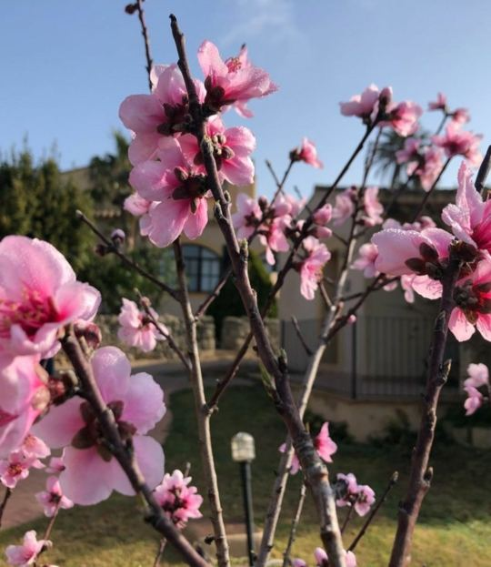 Yin Yang Yoga zur Mandelblüte auf Mallorca