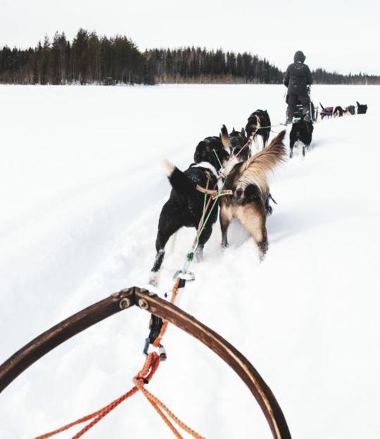 Winter in Schweden - Yoga, Nordlichter und Husky-Abenteuer